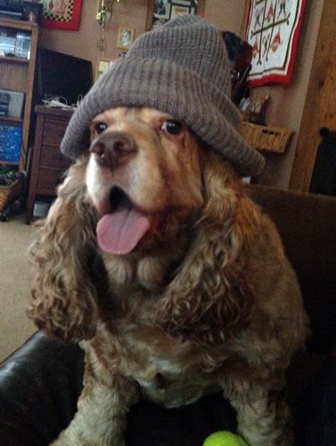 ollie in a hat