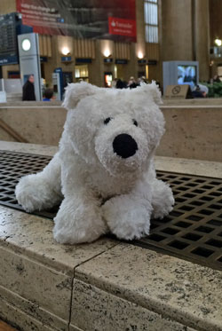 OllieBear came to the Big Annual Meeting with me. This is him at 30th street station.