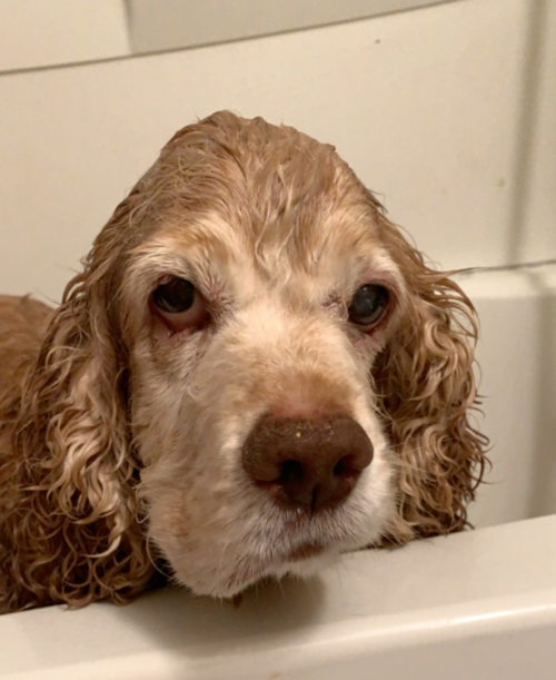 pissed off wet dog in tub
