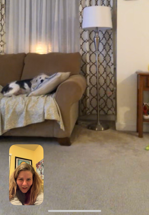 Facetime screenshot of my mom's dog.