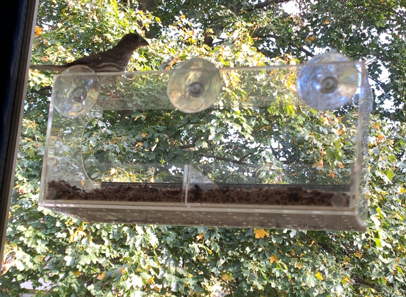 birdfeeder attached to window by suction cups.
