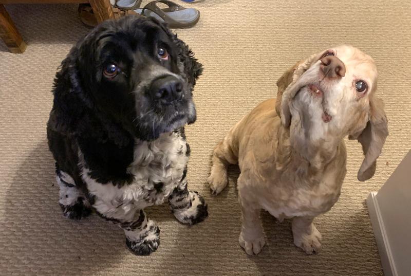 Murphy and Ollie looking upward