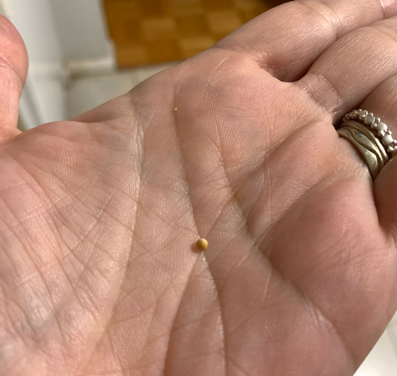 a mustard seed in the palm of my hand