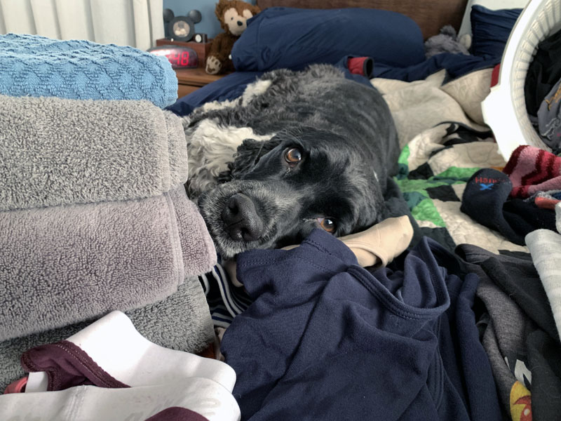 murphy on the bed with piles of folded laundry