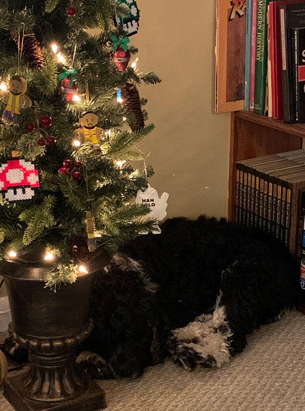 dog sleeping next to a Christmas tree