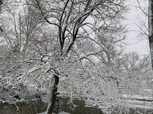 a snow covered in tree