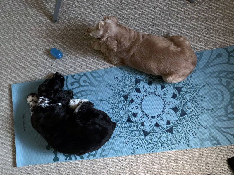 Ollie and Murphy on my yoga mat.