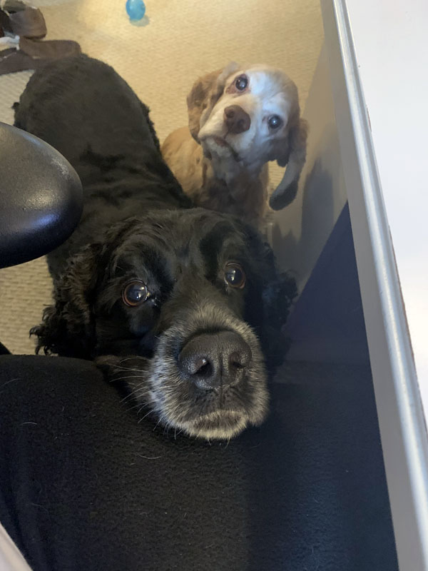 two dogs begging for my lunch