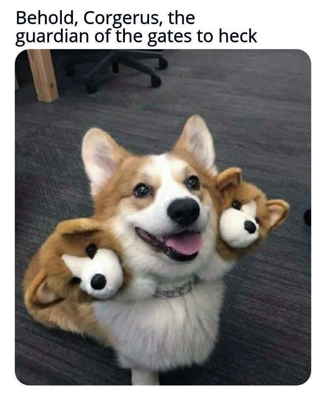 meme: Behold, Corgerus, the guardians of the gates to heck, with a photo of a cute Corgi wearing two extra Corgi heads