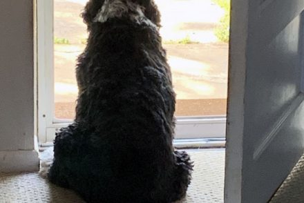 murphy looking out the door, photographed from behind