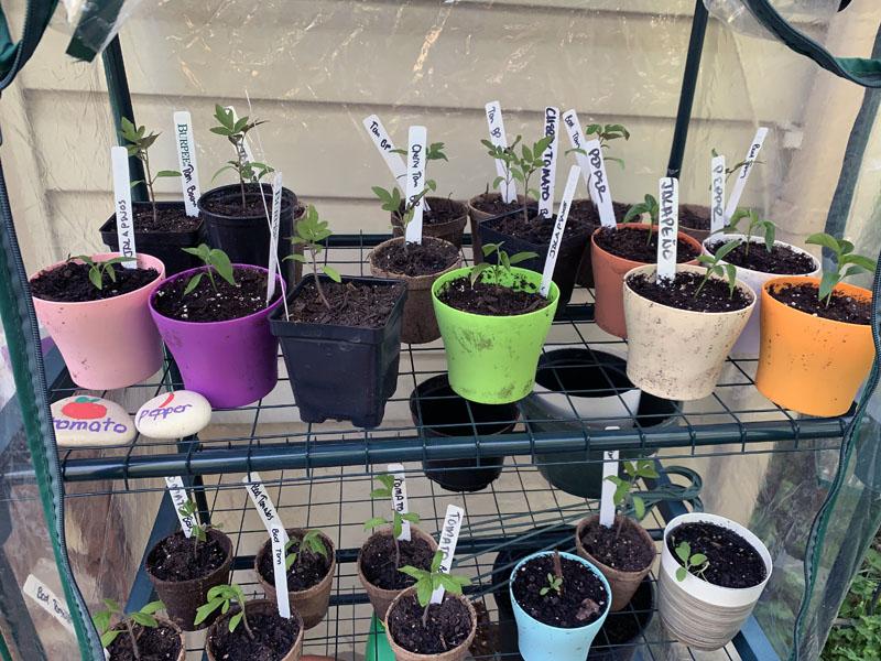 plant pots on shelves