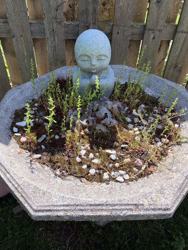 a birdbath garden of moss and tiny green plants