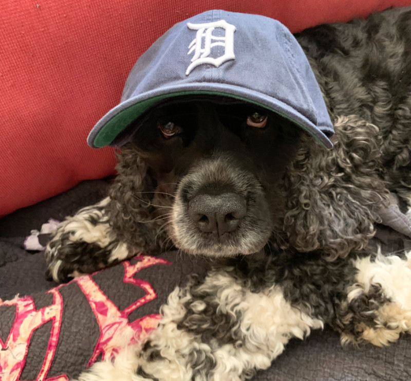 murphy wearing a Detroit Tigers hat for no reason