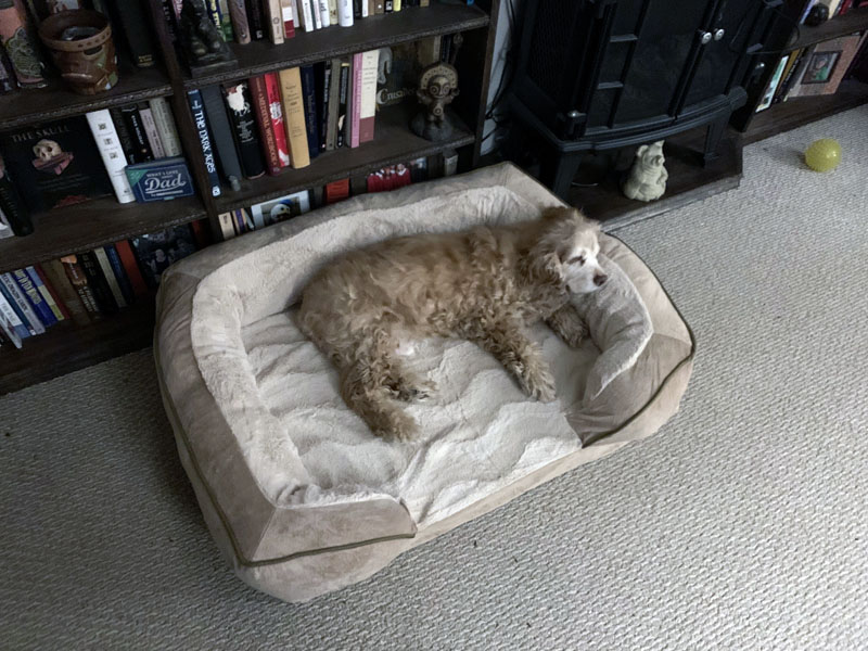 ollie in his bed