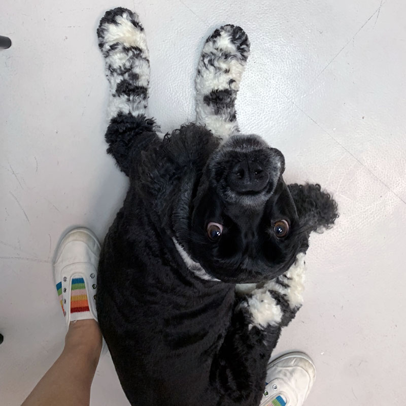 murphy at the vet