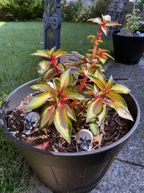 small plastic skulls in a flowerpot